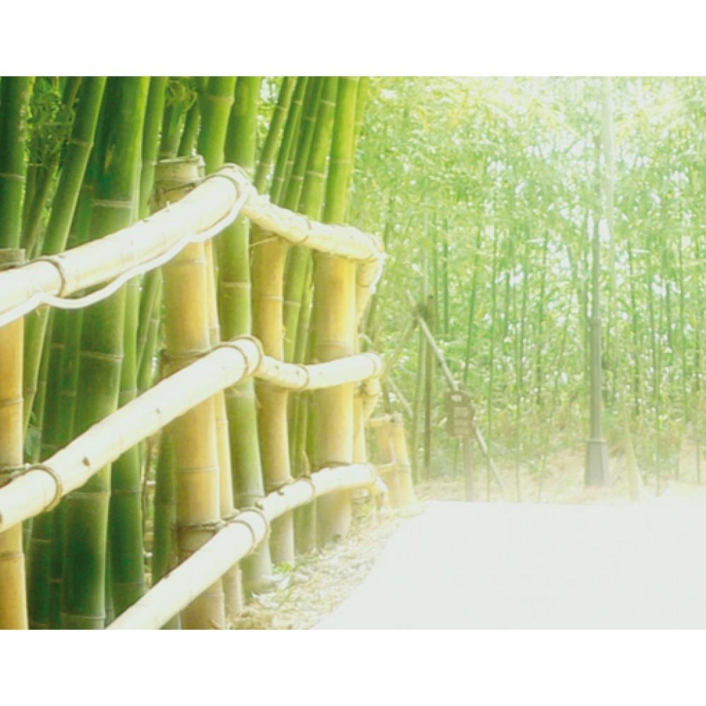 Fototapet Bambus No 9 Mantiburi