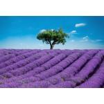 Fototapet Provence 144