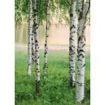 Fototapet Nordic Forest 381