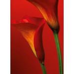Fototapet Red Calla Lilies 406
