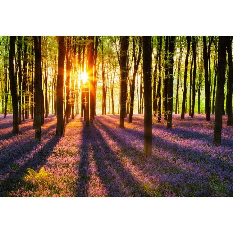 Fototapet Woodland at dawn 952