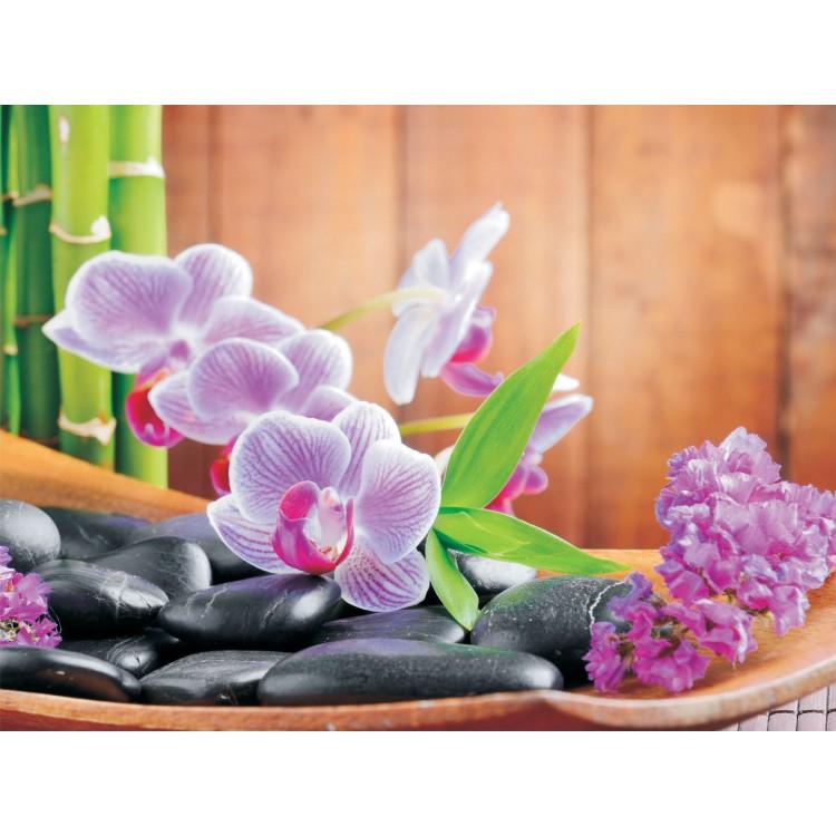Fototapet Orhidee 115