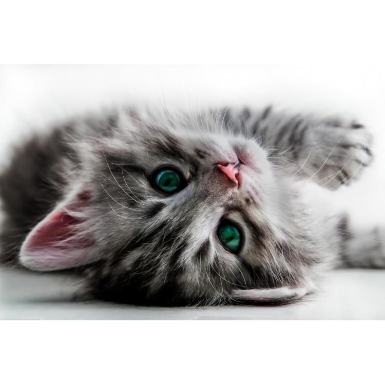 Fototapet Pisica 1183