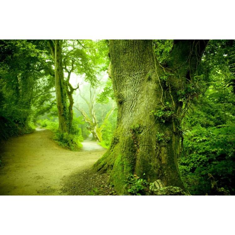 Fototapet Pădure fermecată 290