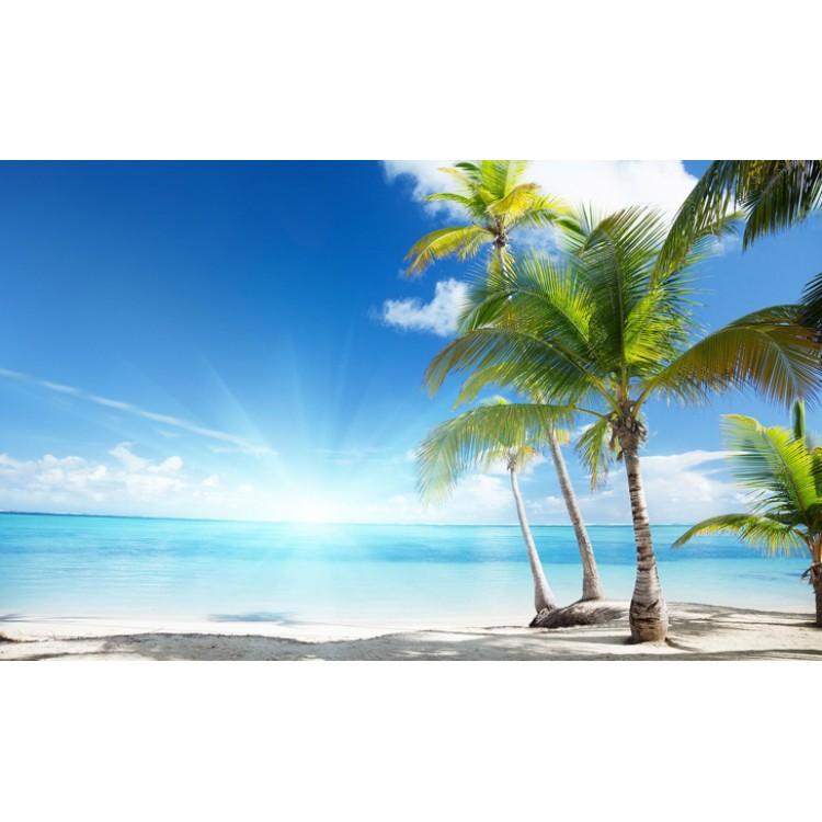 Fototapet Palmieri pe plajă 735