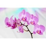 Fototapet Orhidee 116