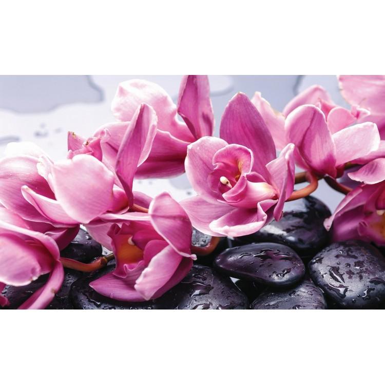 Fototapet Orhidee & Spa 1337
