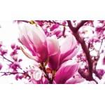 Fototapet Magnolia 1341
