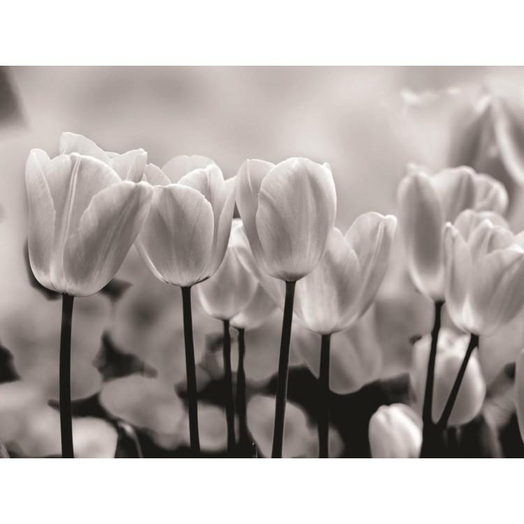 Fototapet Lalele albe si negre 287